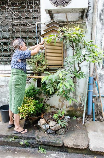 Man tending his urban garden.