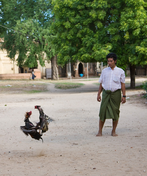 A man 'works out' his valued fighting cocks.<br /> <br /> Location: Nyaung U, Myanmar<br /> <br /> Lens used: 24-105mm f4.0 IS