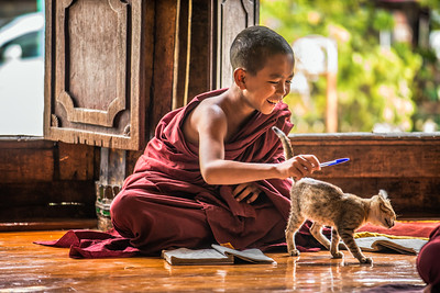 Southeast Asian child monk gets distracted by a cat from learning