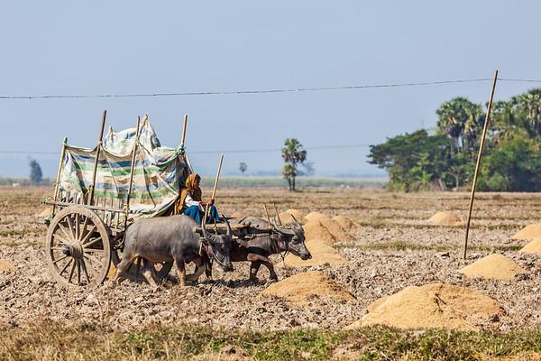Unidentified Burmese peasant working in the field
