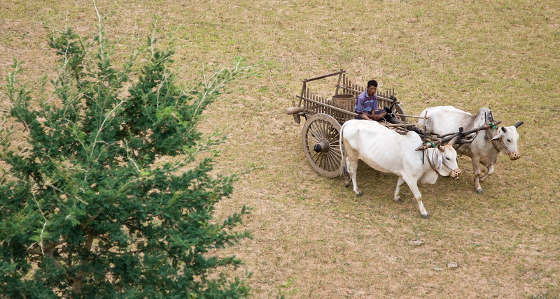 Man with his cattle-drawn cart as shot from atop a temple.<br /> <br /> Location: Bagan, Myanmar<br /> <br /> Lens used: 24-105mm f4.0 IS
