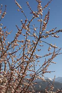 Springtime in Leh...