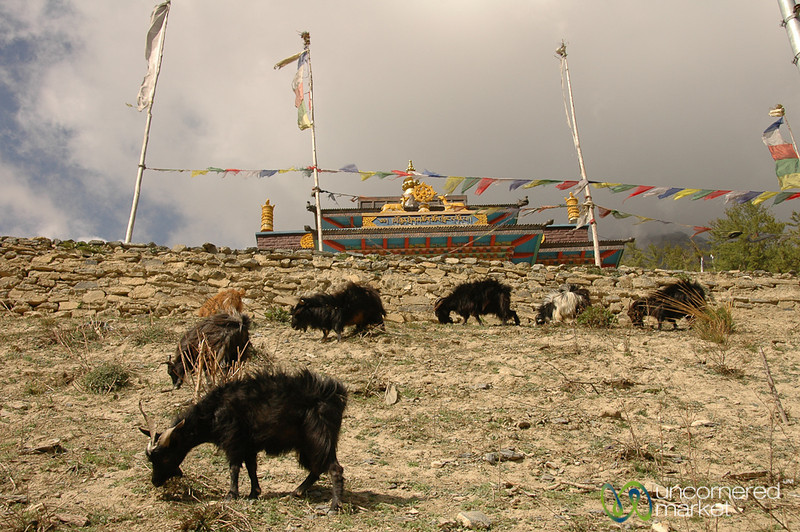 Of Goats and Buddhist Gompas - Annapurna Circuit, Nepal