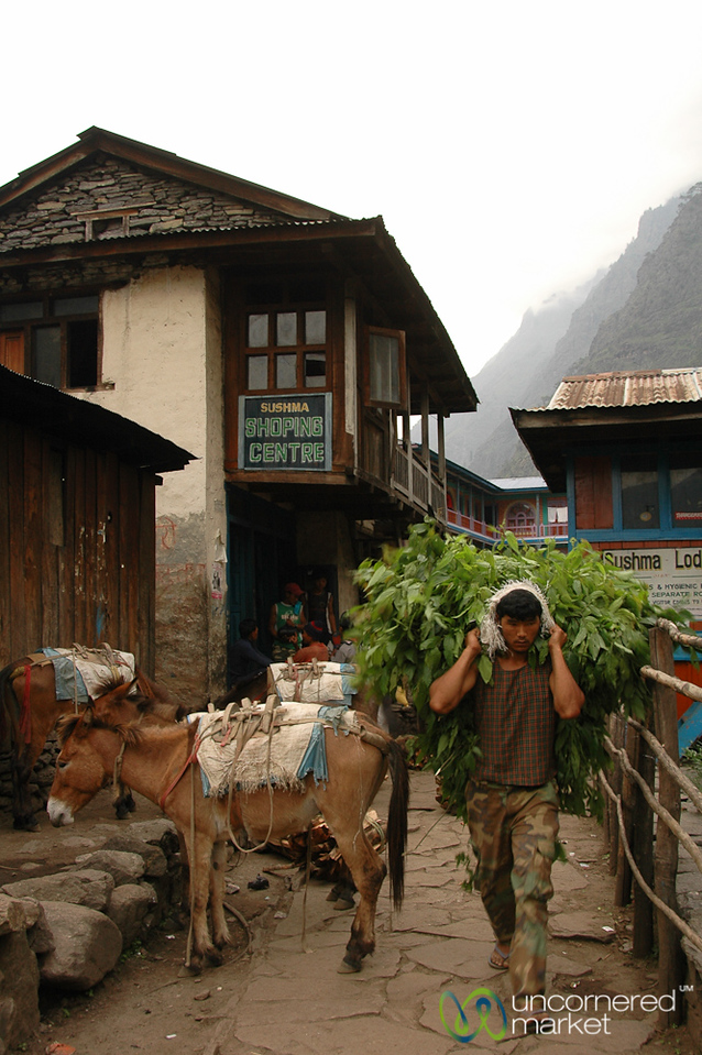 Carrying a Heavy Load Through Town - Annapurna Circuit, Nepal