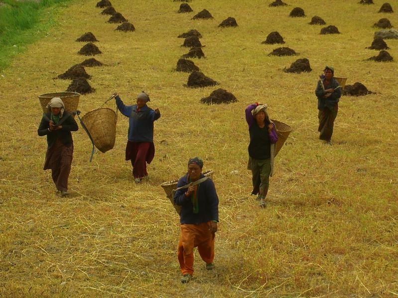 Harvest Time - Annapurna Circuit, Nepal