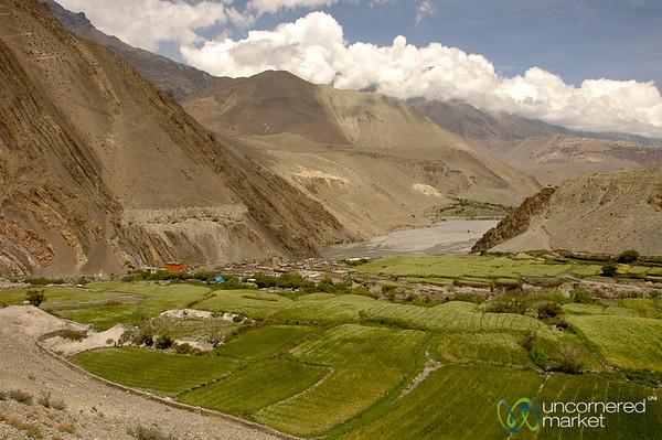 Lush Fields on the Way to Kagbeni - Annapurna Circuit, Nepal