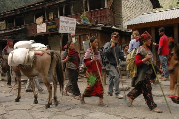 People Hunting for Yarchagumba - Annapurna Circuit, Nepal
