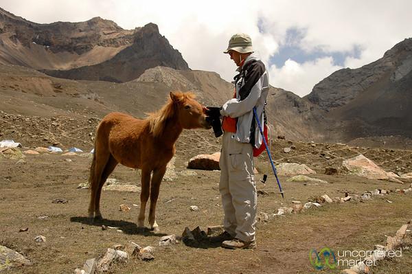 A Baby Horse at Yak Lake - Annapurna Circuit, Nepal