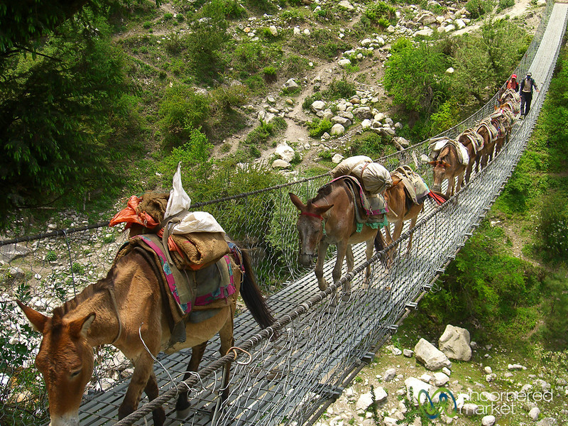 Agile Mules on a Narrow Bridge - Annapurna Circuit, Nepal