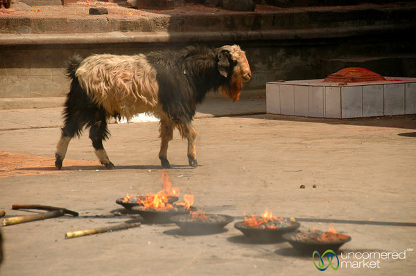 Goats and Burning Offerings - Patan, Nepal