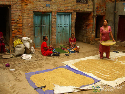 Harvest Time in Bhaktapur, Nepal