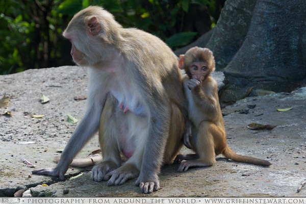 Monkey and Baby in Nepal