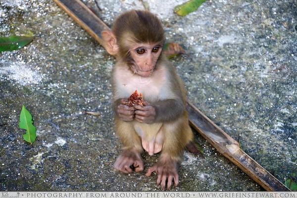 Monkey Eating Candy