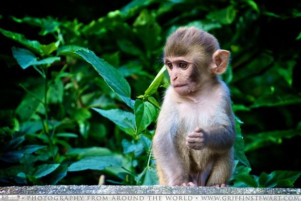 Cute Monkey in Nepal