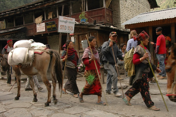 People Hunting for Yarchagumba - Annapurna Circuit, Nepal