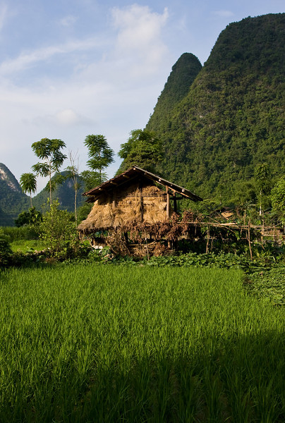 A hay shed and vegetable garden set amongst rice paddies.<br /> <br /> Location: Unknown village, northern Vietnam<br /> <br /> Lens used: 24-105mm f4.0 IS