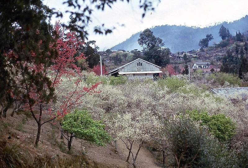 Springtime in Taiwan
