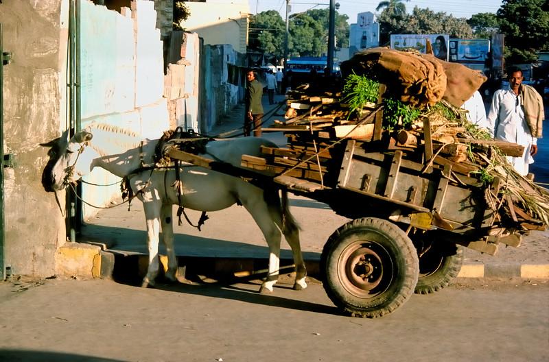 Donkey cart - Karachi, Pakistan
