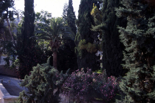 En hage i Jerusalem, denne gang i nærheten av Holocaust-museet. (Foto: Geir)