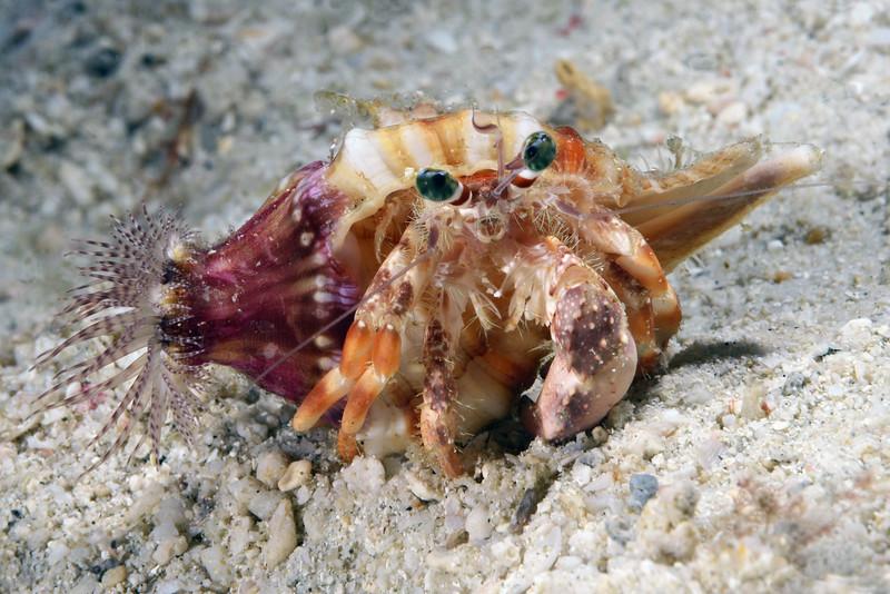 181120_Crab4
