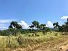 Northeast landscape, PNG