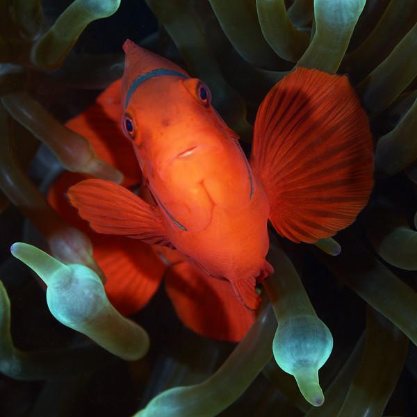 181125_Fish6a