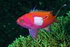 181125_Fish1b