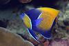 181125_Fish10