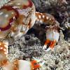 181120_Crab3c