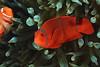 181125_Fish6b