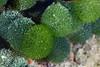 181125_Algae