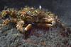 181115_Crab2