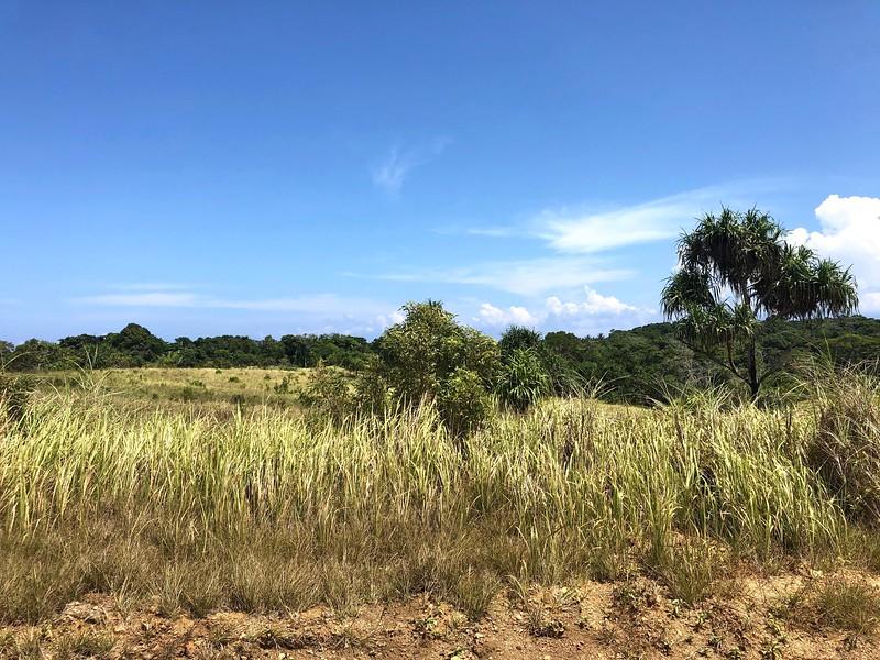 NE landscape, PNG
