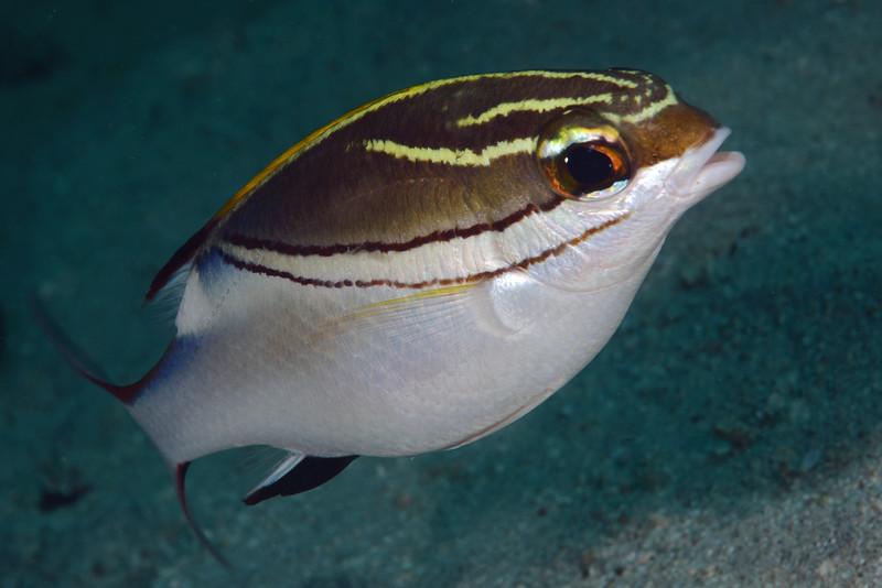 181120_Fish7b
