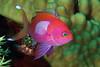181125_Fish1a