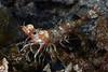 181120_Shrimp3a