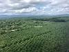 Huge Palm Farms in Alotau, PNG