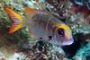 181124_Fish3b
