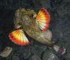 181125_Fish13d