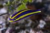 181117_Fish5c