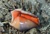 181119_snail