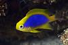 181120_Fish5