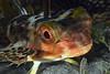 181123_Fish3c