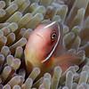 181124_Fish6b