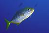 181125_Fish11