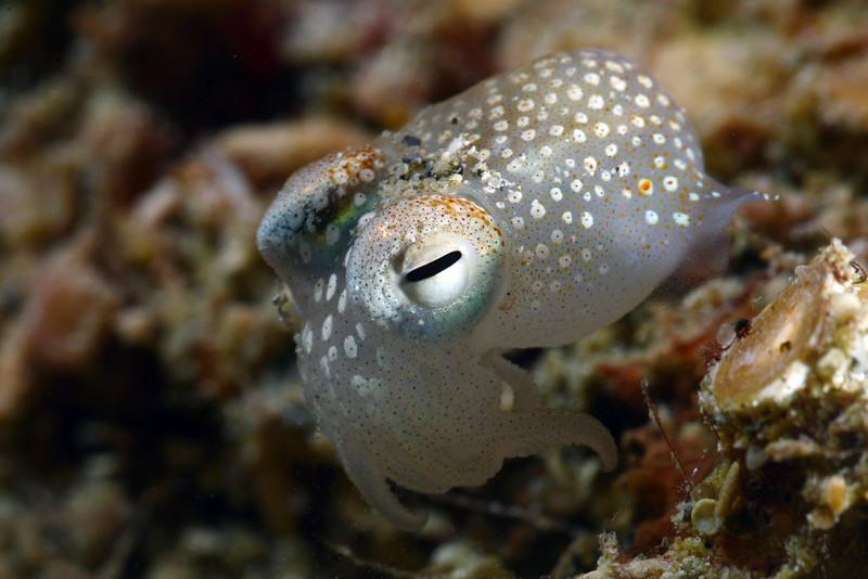 181124_Squid1c