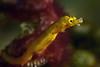 181118_dragonfish3