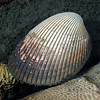 181115_shell