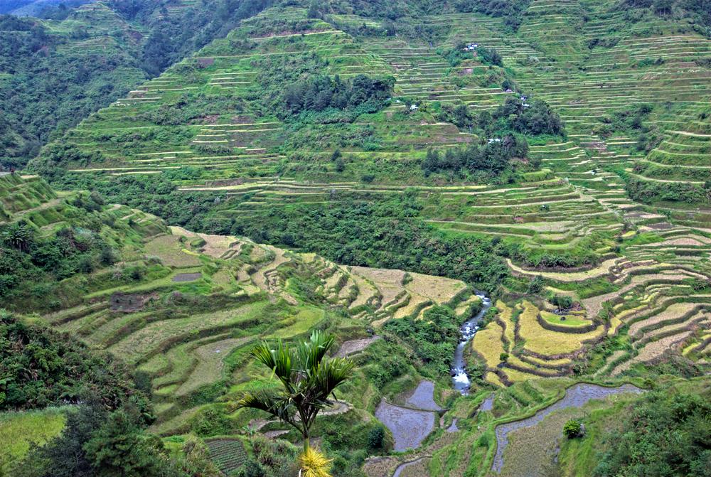 Rice Terraces of banaue, Philippines