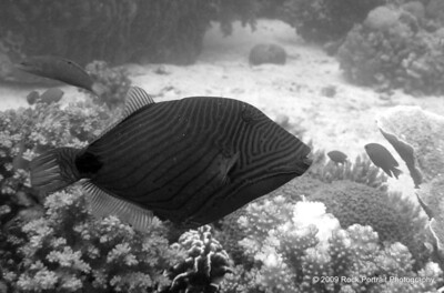 Who'd have thought a fish photo would look OK in black and white?